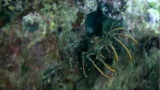 preview picture of video 'Destination les Grenadines part 3'