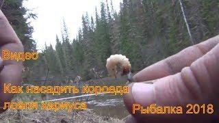 Ловля голавля зимой на короеда