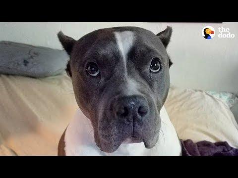 Rescue Pittie Talks To Her Mom Nonstop | The Dodo