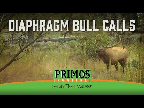 How to Make Bull Elk Sounds on a Diaphragm Call video thumbnail
