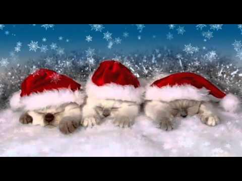 Schönes Weihnachtsvideo ;)