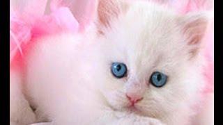 Şu Kediyi Tutuverirsem Şarkısı + Şarkı Sözü - çocuk şarkısı