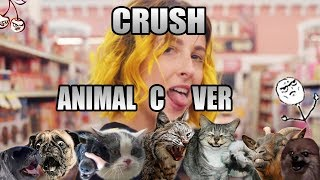 Tessa Violet - Crush (Animal Cover)