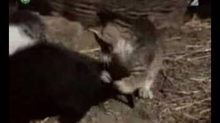 Rozprávka: Pa a Pi - 01 Vitajte na Zemi (mačka domáca)