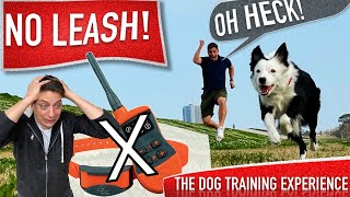 How To Prepare Your Canine to Be OFF LEASH And not using a Shock Collar!