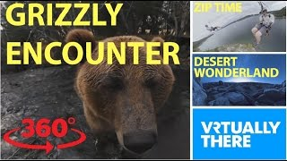 An adorable encounter with a grizzly bear in VR, scream down a crazy zipline