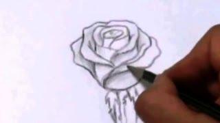 Рисуем Розу.