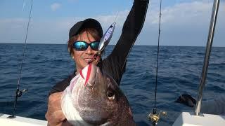 こんなに真鯛が簡単に釣れるんです!!!
