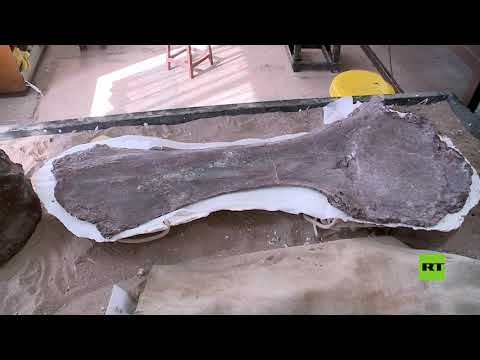 العرب اليوم - شاهد: اكتشاف أقدم أحفورة تيتانوصور على الإطلاق في الأرجنتين