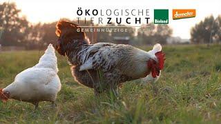 Sprecher Erklärfilm | Ökologische Tierzucht
