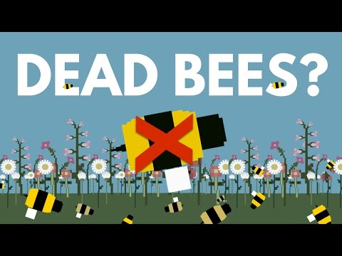 What Would Happen To You If All The Bees Die?