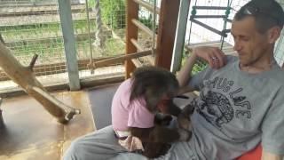 обычный выходной...  ( один день из жизни домашних обезьян)