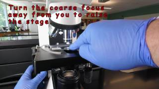 How to Focus Using Oil Immersion Microscopy (1000X)