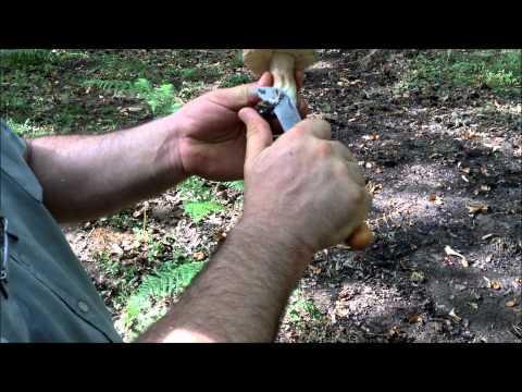 Il fungo a cani da pastore che trattare