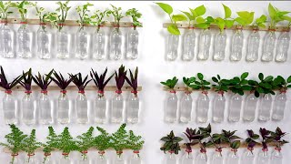 New Ways To Make Indoor Gardening With Plastic Bottles In Water (Wall Plants Decor)