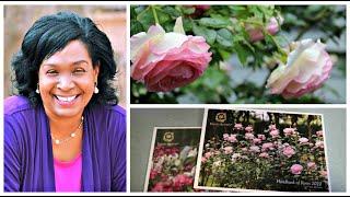David Austin English Roses Handbook 2020 | Urban Cottage Garden | Catherines Garden
