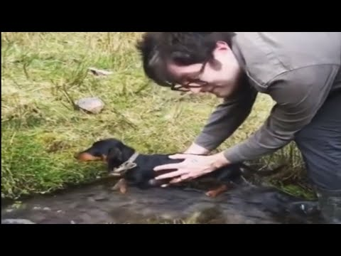 Dachshund air-swims when held above water