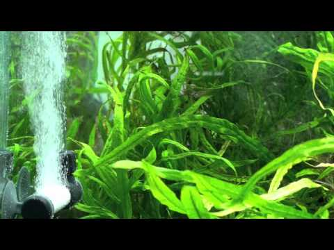 Green Leaf Aquariums Atomic Co2 Diffuser II