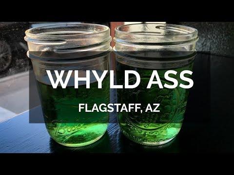 Video Vegan Voyagers Eat: Whyld Ass Restaurant, Flagstaff AZ