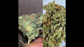 Hemp vs Marijuana. What is the difference?