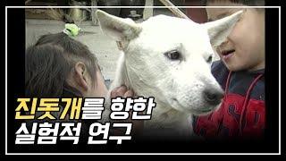 우리나라 혈통 진돗개를 향한 실험적연구 / An Experimental Study on the Jindo Dogs of Korean descent
