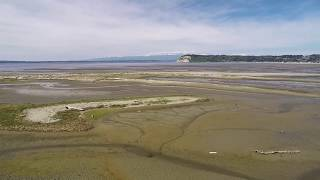 What happened to the wild salmon?  One community's step toward recovering the wild salmon runs