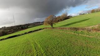 FPV Flying Tree in a field with Crashes!