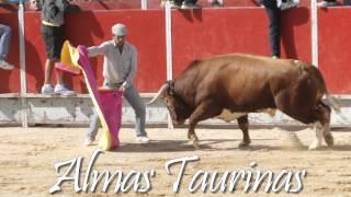 preview picture of video 'Encierro y capea Velilla San Antonio 25-9-2012.'