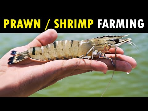 , title : 'WESTCOAST - Best Shrimp Farm & Fish Farm in India | Shrimp Farming / Prawn Farming & Fish Farming