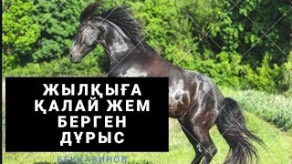 Жылқыға қалай жем береміз,Как откормить лошадей