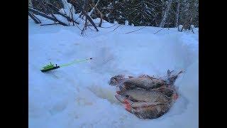 Отличная рыбалка в январе на Ямале . Глухозимья у нас нет.