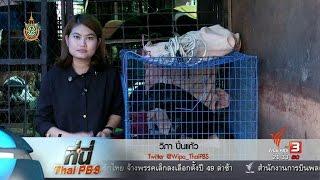 ที่นี่ Thai PBS - ที่นี่ Thai PBS : แก้ปัญหาหมาจรจัดล้นเมือง
