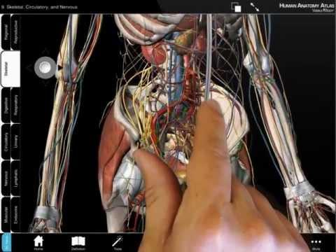 Human Anatomy Atlas Android Free Download Human Anatomy Atlas App
