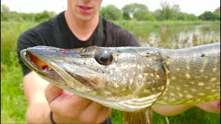 BIG Pike Attacks Hooked Perch -- Ch. 8