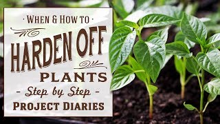 ★ When & How to Harden off Plants (What to know before Planting Out)