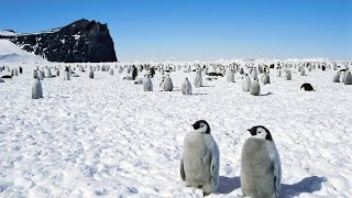 Антарктида Без Цензуры. Что Рассказывают Полярники