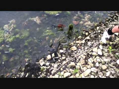 Summer Pond Panfish and Bass Fishing