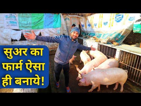 सूअर फॉर्म कैसा हो समझे How to Make/Start Pig Farm in India Suar Shed Design