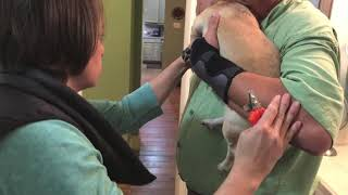 How to trim Agressive Dog nails The best way