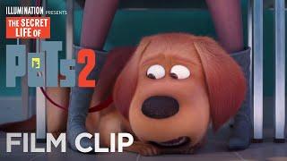 The Secret Life Of Pets 2   Clip: At the Vet - Now on 4K, Blu-ray, DVD & Digital   Illumination