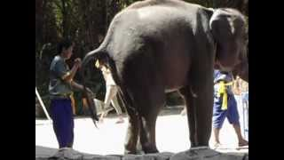 ПРИКОЛ со слоном!