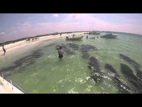 游島驚喜!遇上罕見的海牛成群「路過」船底!