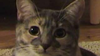 Drama Prairie Cat - Kill Bill