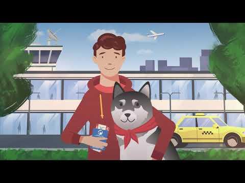 Видеоинструкция: как путешествовать с домашним животным по территории России