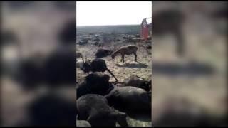 ЧП со сгоревшим пастухом в Костанайской области: начато расследование