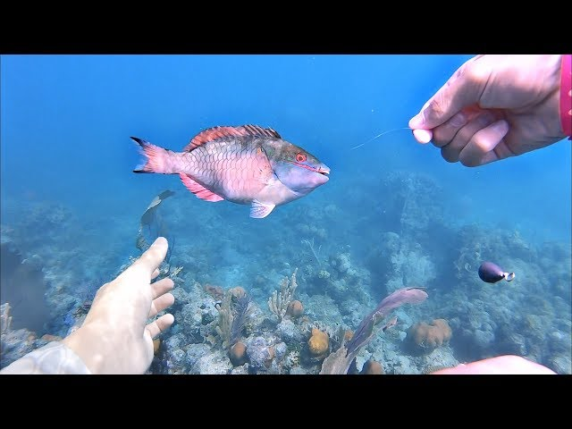 Underwater Fishing!! Catching Tropical Fish w/ my Hands!