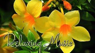 Успокаивающие нервы музыка relaksacynej