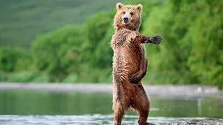 Позитив от танцующих животных /  Positive from dancing animals