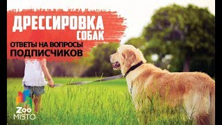 Ответы на вопросы подписчиков | Как правильно дрессировать собаку | Дрессировка и воспитание собак