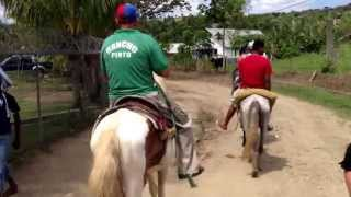preview picture of video 'Going horseback riding through a small Haitian Village www.ranchopinto.tk'
